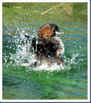 Rietvlei 7-5-2012 040