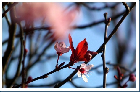 Spring signs 005