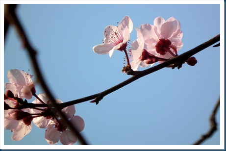 Spring signs 007