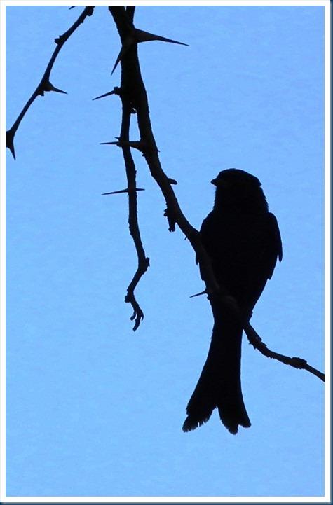Len 03-10-2012 017