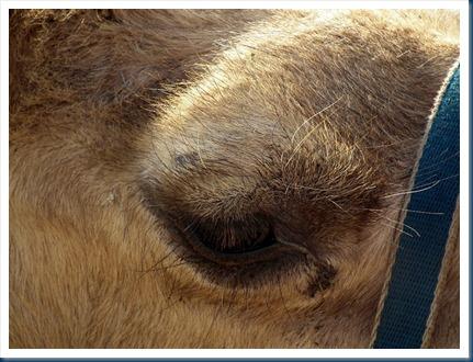 Len14-15-09-2012 004