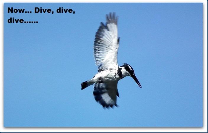 tania.. blue crane 053