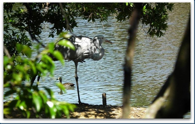 tania.. blue crane 087