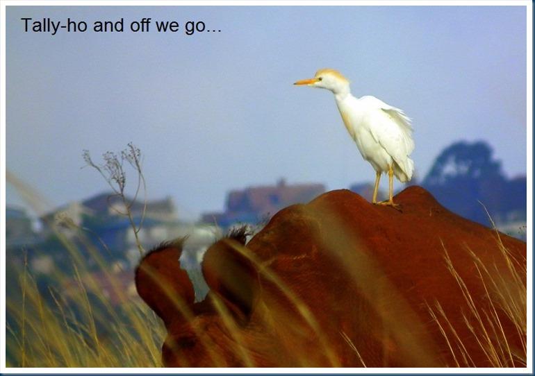 rietvlei 28-10-2012 112