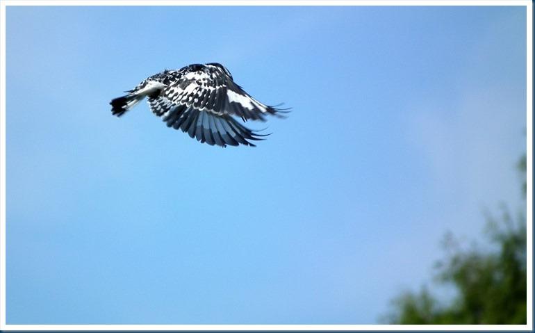 tania.. blue crane 079