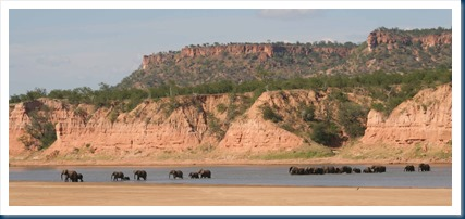 Elephants at Chilojo Cliffs