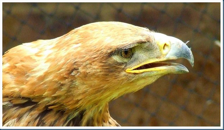bird beak